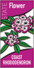 Thumbnail of state flower (Coast Rhododendron) banner